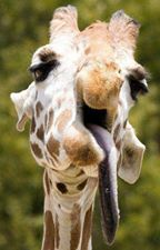 giraffe profile picture